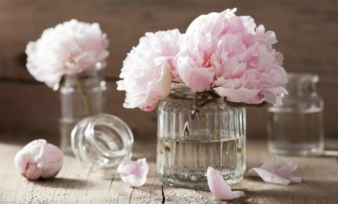 Vazo Çiçekleri İçin Koruyucu Su