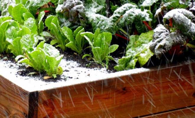 Bitkileri Soğuktan Koruma Yolları